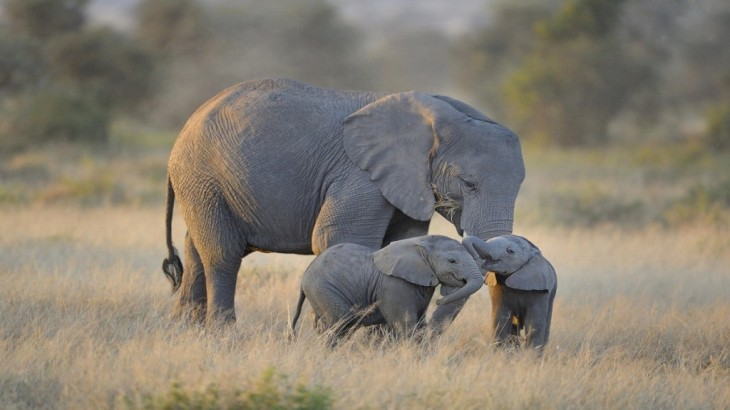CUTEEEE-ELEPHANTS-right-size-1024x576